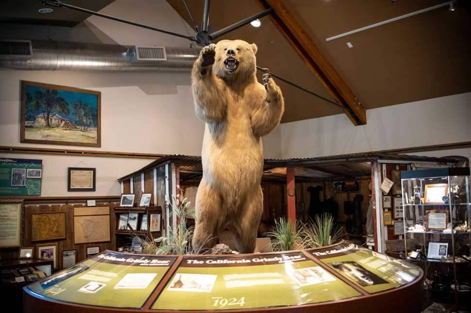 valley center museum bear